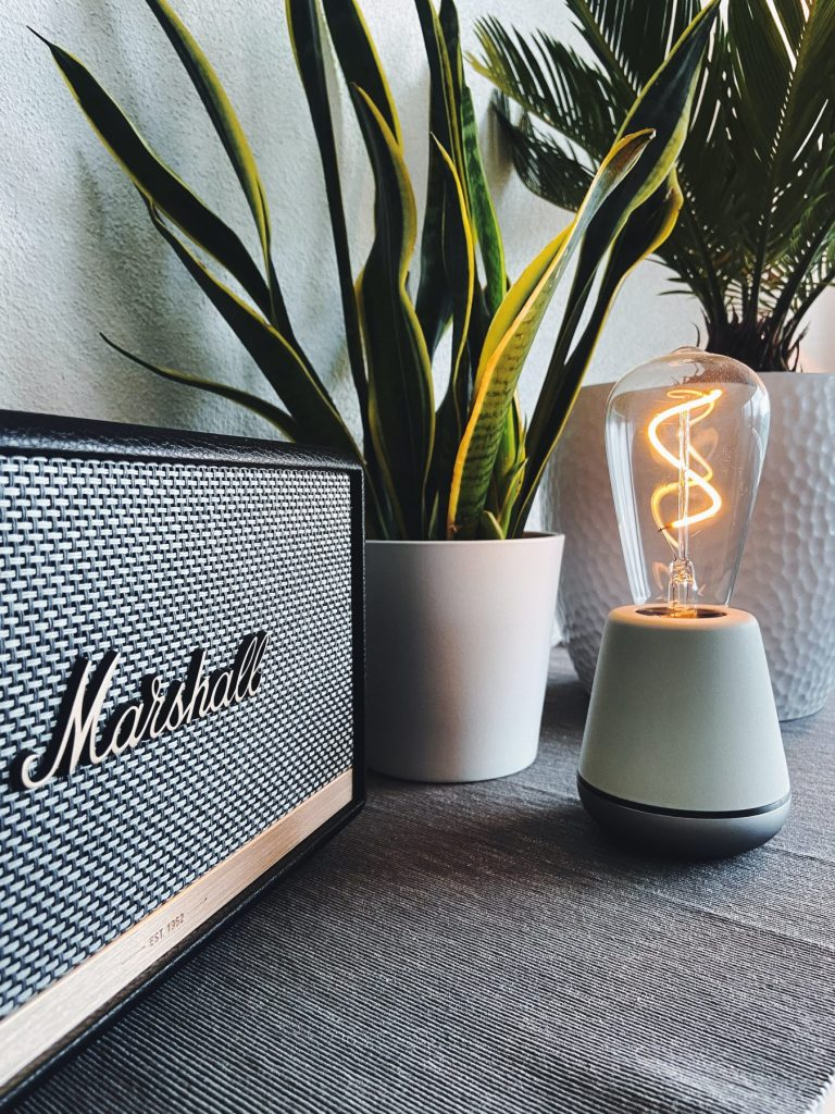 indoor plant next to marshall speakers